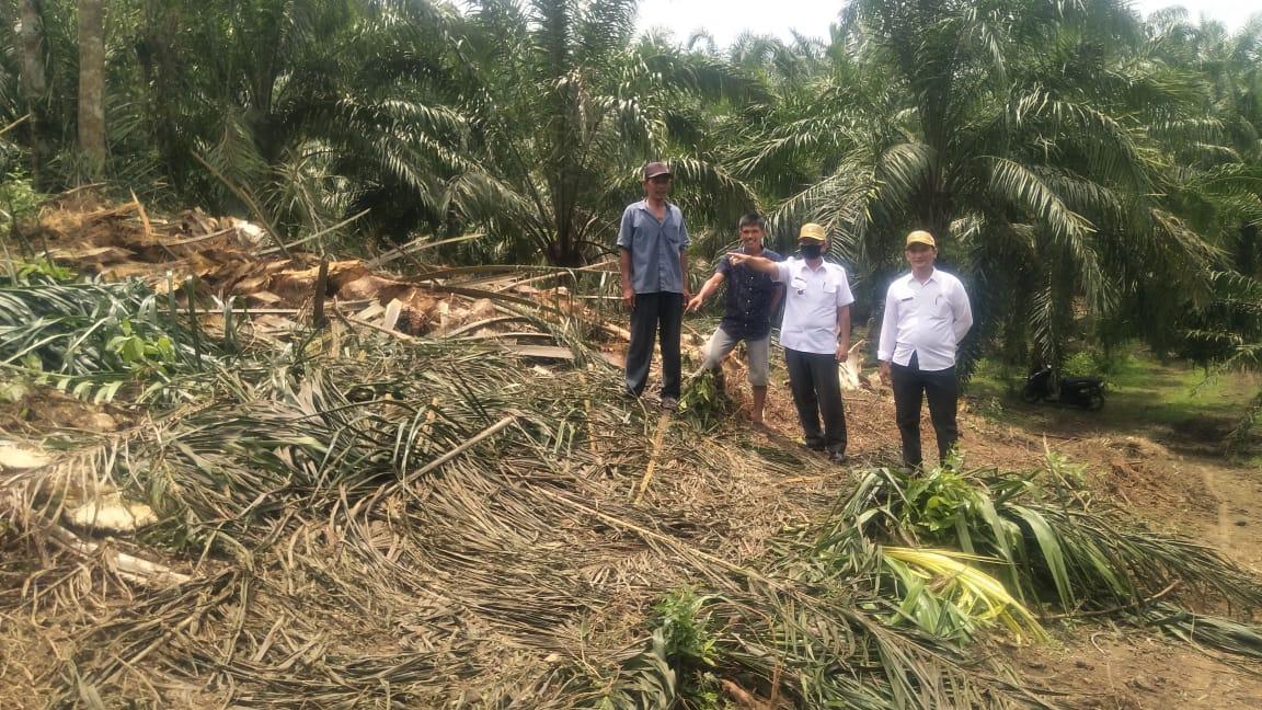 Dinas Pertanian Pemkab Asahan Launching Perdana PSR