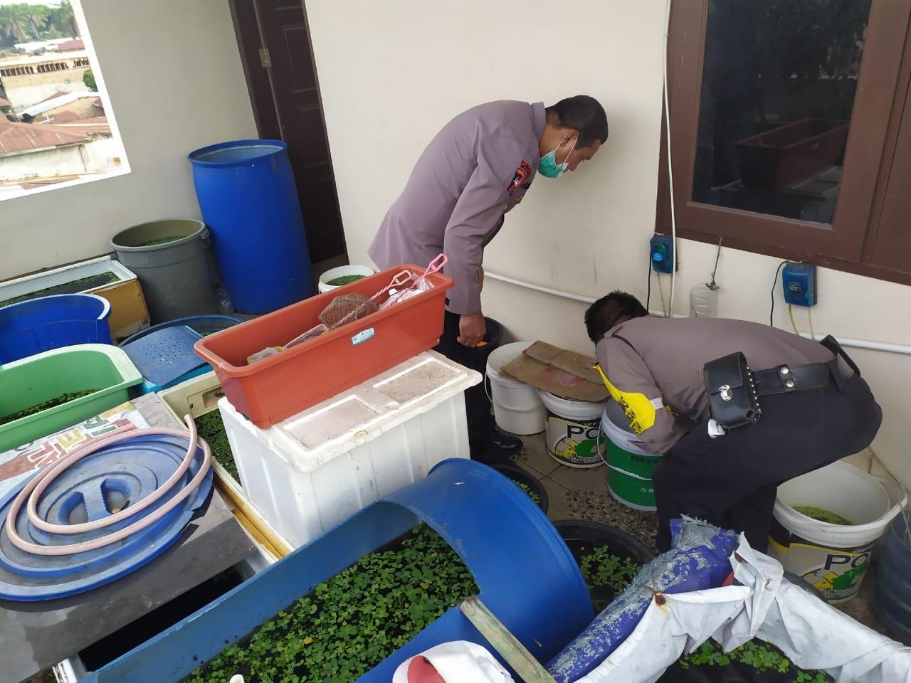Personel Bhabinkamtibmas Polsek Medan Helvetia Membudidayakan Ikan Cupang